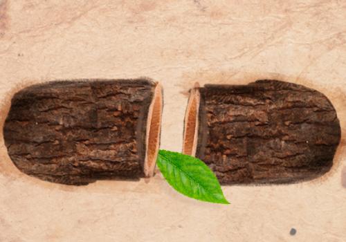 Dia Nacional da Educação Ambiental: data fortalece busca por uma sociedade sustentável