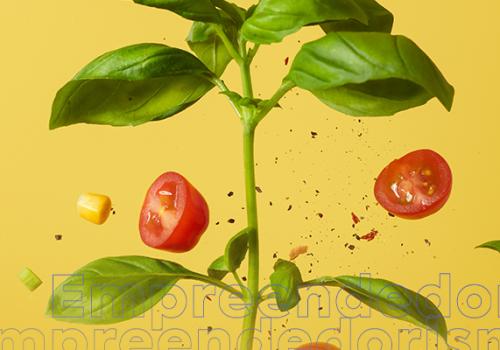 Empreendedorismo na Nutrição: docente do Florence dá dicas de como criar um negócio na área