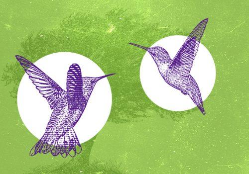 Dia da Árvore e Dia Nacional de Defesa da Fauna são celebrados neste 21 e 22 de setembro